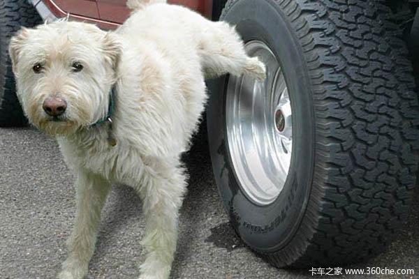 从车用尿素防狗狗到DIY加注安全注意