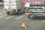 小狗被绑车尾拖死 皮卡司机冷血太残忍