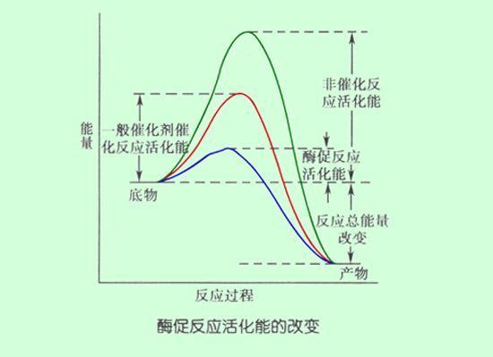 青年<a href='//www.zyqc.cc/Article/Search/%e5%8d%a1%e8%bd%a6%e5%8a%a0%e6%b0%b4'>卡车加水</a>就能跑&nbsp;&nbsp;你们说这是真的吗