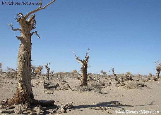 土壤肥沃才能长出大树