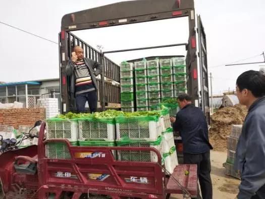 蔬菜运输,一路新鲜