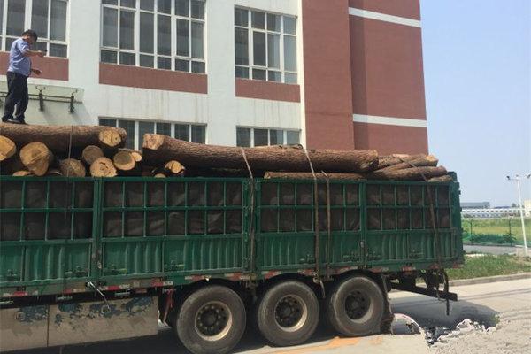 化身香车?卡车浑身散发奇香民警查扣发现国家重点保护植物香樟