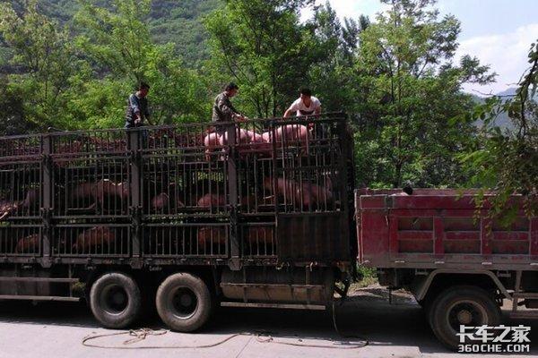 国务院发文:生猪等活禽畜运输不再享受绿通政策