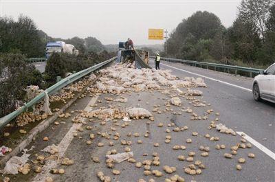 满载土豆的货车高速侧翻路政紧急救援