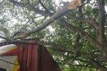 货车撞断几棵树 竟被树主人索赔15000!