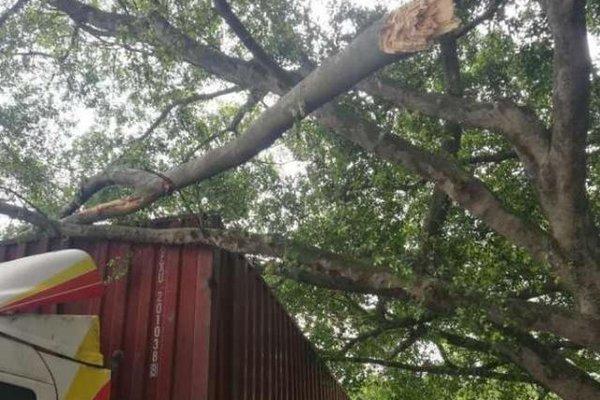 货车撞断几棵树竟被树主人索赔15000!