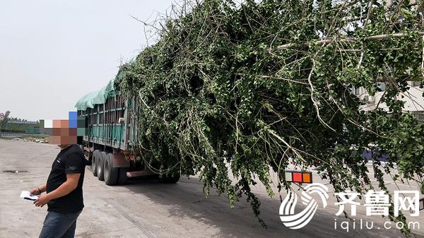 冠县:大货车违规装载货物上路被拦下