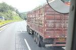 男子碰瓷大货车 被揭穿后还求助交警?