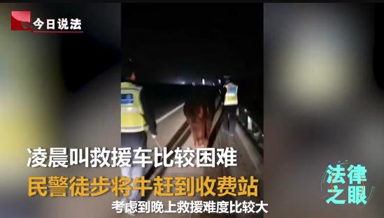 陕西西安交警喊话卡友:谁丢牛了,速来认领,牛的情绪不是很稳定!