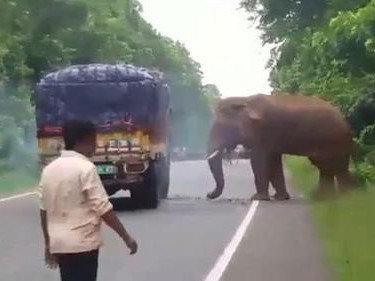 大象正在赶路,下一秒却突然冲向货车!