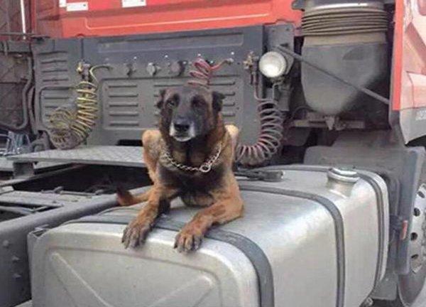 为防偷油卡友加锁养狗睡油箱油耗子:你在怀疑我的职业水平?