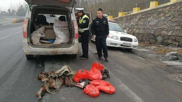 交通部:将进一步依法加强对野生动物的运输管理