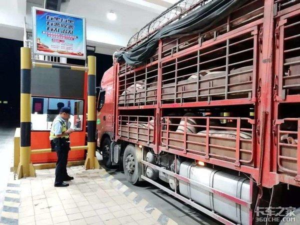 从养殖场到超市,猪肉是如何运输的?