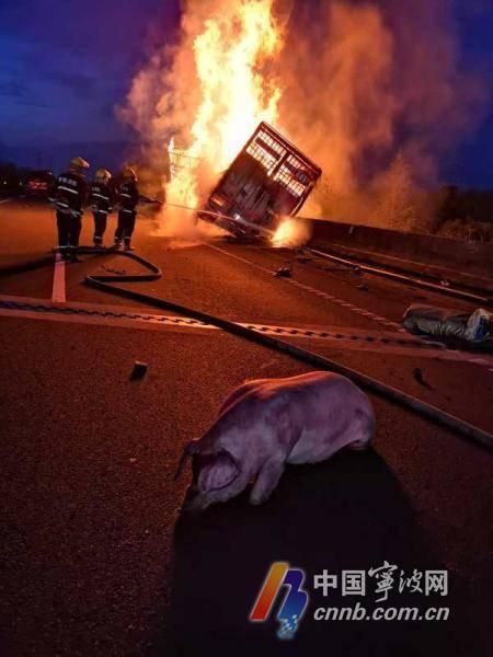 货车起火91头猪被烧死或熏死仅剩一头逃出生天