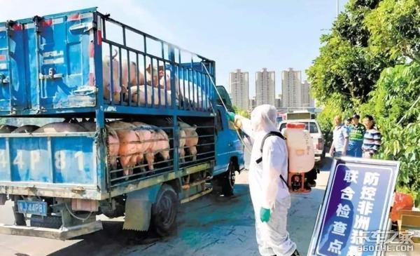 最强运输禁令!明年4月起将限制活猪调运严禁使用未备案车辆运输生猪