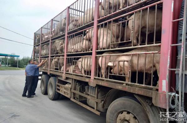 活猪调运将受限制这款55立方的9.6米肉钩车可以准备起来了