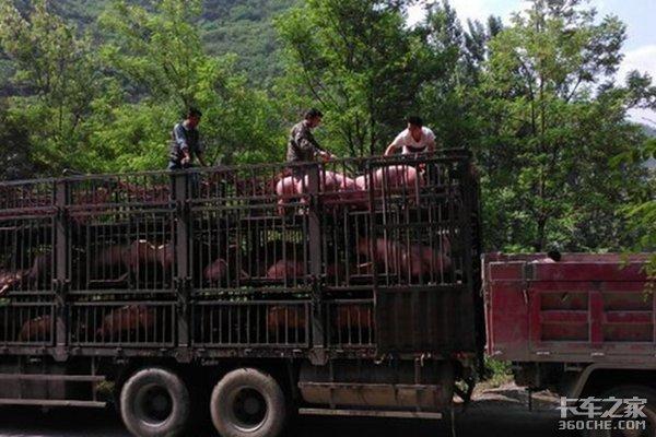卡友们注意了明年4月起限制活猪调运农业部已下达死命令