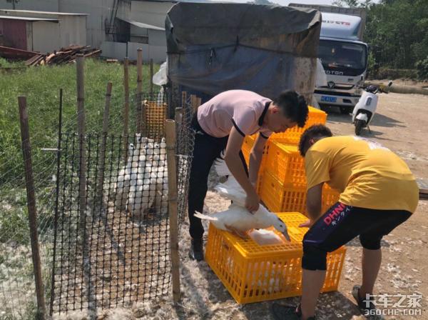 卡家时评:活禽交易市场逐步取消运送活禽的卡友或将被迫转行