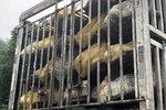 卡家时评:活禽交易市场逐步取消 运送活禽的卡友或将被迫转行