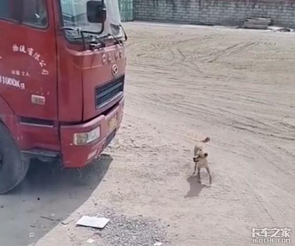 卡友换车忘了告诉爱犬背后却令人心酸