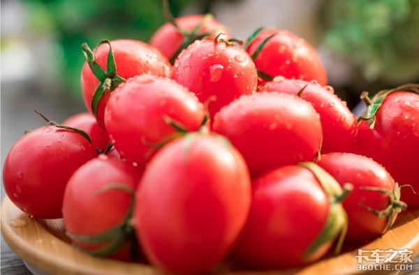 都是西红柿拉圣女果为什么不能走绿通