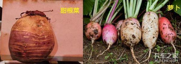 这5种农产品常被误认为是绿通,卡友们请注意,其实它们是普货