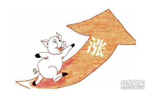 活猪运输曾月入8万不是梦如今怎么样?