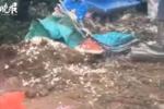 河南村民捡蒜致8死11伤系肇事车超载超速:4人被拘 撒蒜车司机不担责